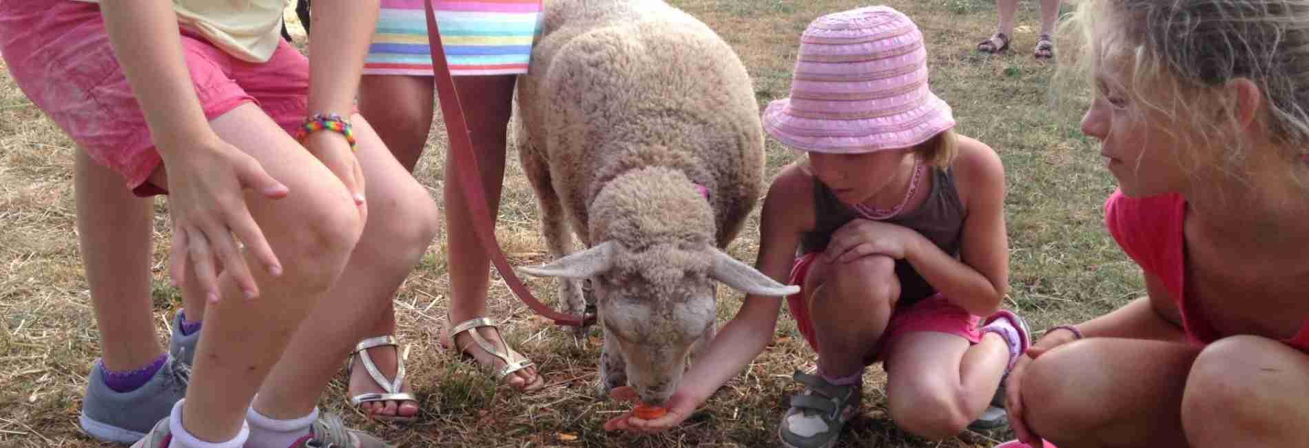 animaux-camping-vacances.jpg
